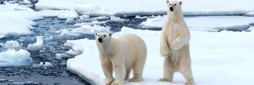 Spitsbergen en Bereneiland
